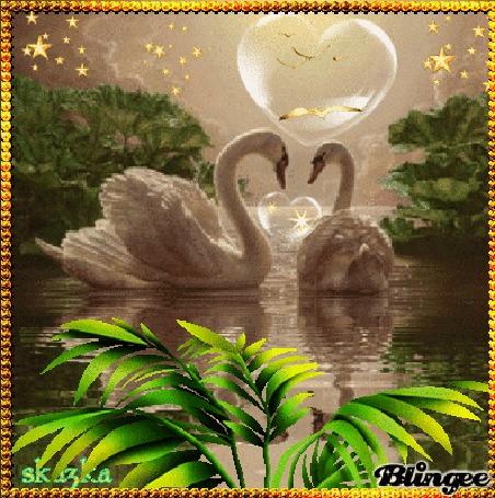 Анимация Два влюбленных лебедя в пруду