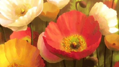 Анимация Разноцветные маки, кадр из аниме Невеста чародея / Mahoutsukai no Yome
