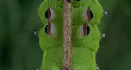Анимация Зеленая гусеница ползет по стеблю