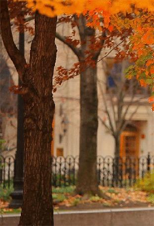 Анимация Осенний листок слетает с дерева