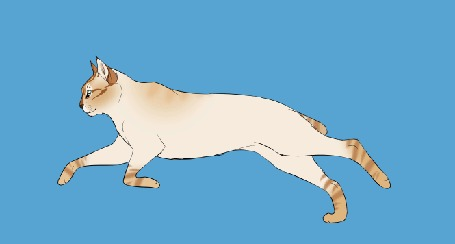 Анимация Бегущая кошка с коротким хвостом на голубом фоне, by DikkeBobby