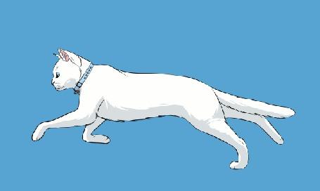 Анимация Бегущая белая кошка на голубом фоне, by DikkeBobby