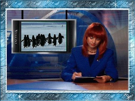 Анимация Девушка ведет передачу, по телевизору показывают пингвинов, (Началась миграция пингвинов в район выходных), автор Svetilo