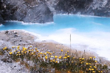 Анимация Над голубым озером легкий дымок, на переднем плане желтые цветы