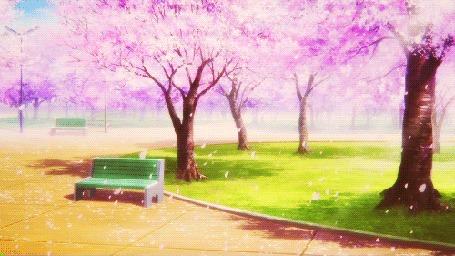 Анимация Медленно падающие лепестки весенних цветов сакуры