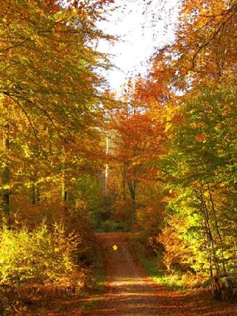 Анимация В золотистом осеннем лесу появляется красивая дама, идет по лесу, а потом исчезает, (Здравствуй Осень!), автор Рен