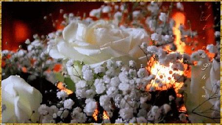 Анимация Белые розы на фоне огня, автор Алена Саншайн