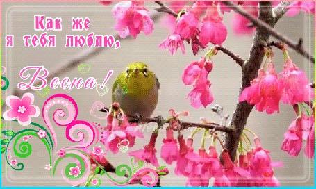 Гифки весна красивые (25 анимаций)