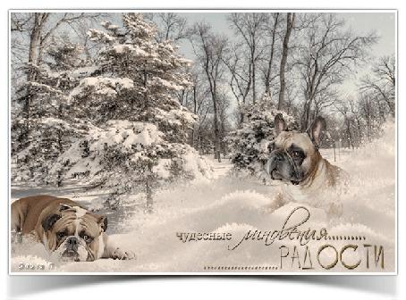 Анимация Французский бульдог и английский бульдожка притаились в снежном лесу, поводя ноздрями и ушами, (Чудесные мгновения радости), автор Ольга Полякова
