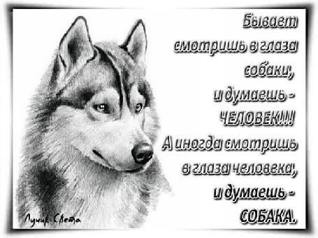 Анимация Собака на белом фоне (Бывает смотришь в глаза собаки, и думаешь — ЧЕЛОВЕК! А иногда смотришь в глаза человека, и думаешь — СОБАКА…), автор Лучик Света