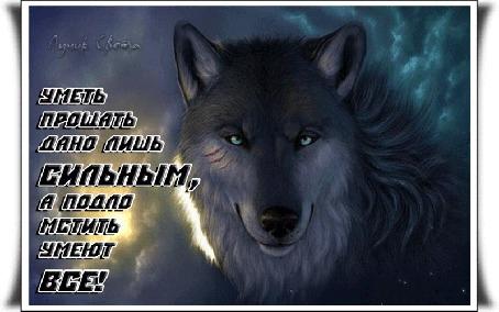 Анимация Волк на темном фоне, (Уметь прощать дано лишь сильным, а подло мстить умеют все! ), автор Лучик Света