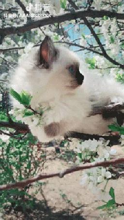 Анимация Котенок на цветущем дереве