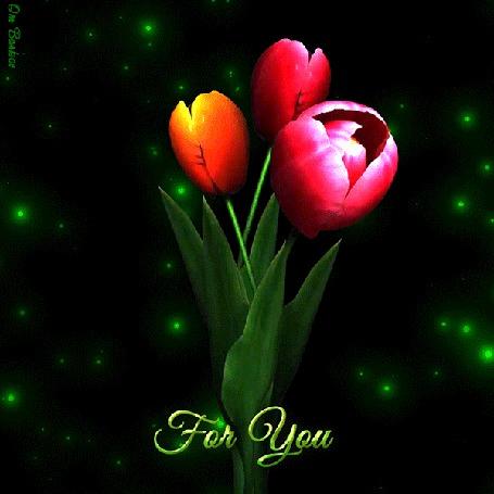 Анимация На фоне бегающих зеленых огоньков раскрываются три тюльпана с фразой For You