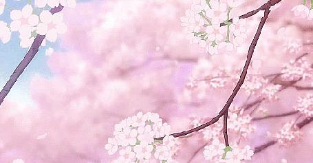 Анимация С цветущих весенних веток слетают лепестки