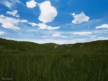 Анимация Трава расходится волнами от ветра в летний день