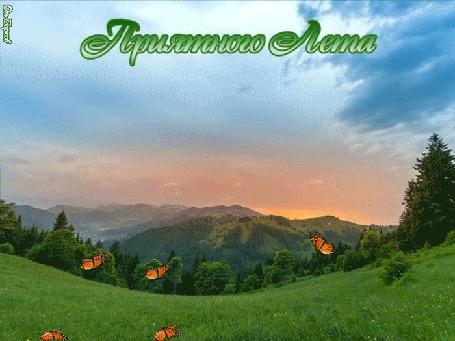 Анимация На горной лужайке порхают бабочки с фразой пожеланием Приятного Лета