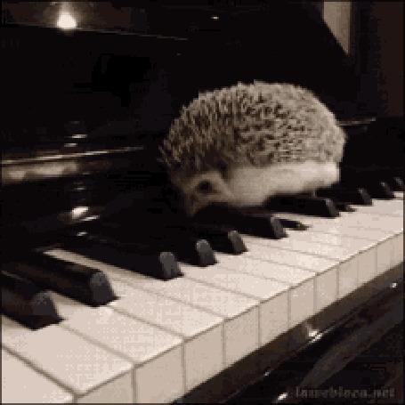 Анимация Ежик шагает по клавишами пианино