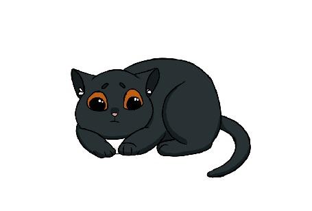 Анимация Черный котенок на белом фоне