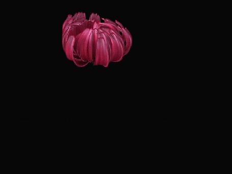Анимация Красивый цветок распускается с зеленым листом вместе с фразой СПАСИБО