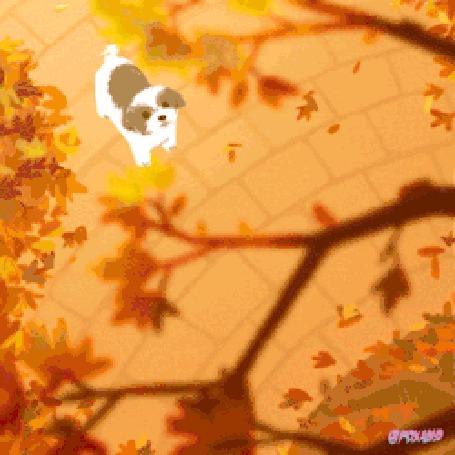 Анимация Некто ворует собак