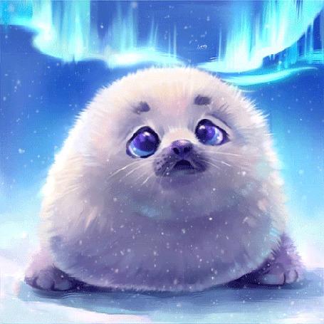 Анимация Маленький тюлень на фоне ночного неба и северного сияния, by xionghea