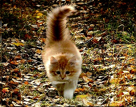 Анимация Пушистый кот идет по осенним листьям среди солнечных бликов, (Осенний Привет), Gala