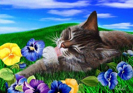 Анимация Кошка нежится на зеленой лужайке среди цветов,(Добра тепла света), Gala