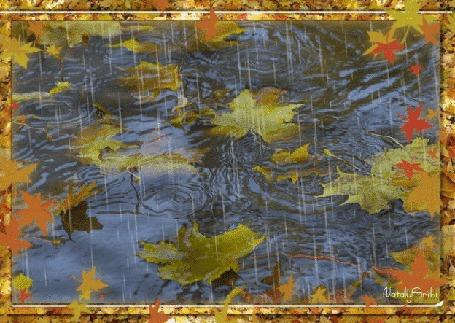 Анимация Дождливое небо отражается в воде с плавающими опавшими листьями, by Nataly Archi