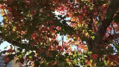 Анимация Коала на дереве в городе
