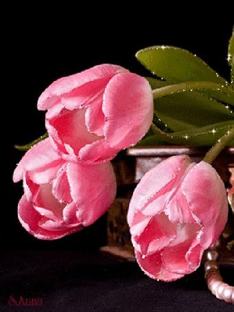 Анимация Розовые тюльпаны на темном фоне, by S Anna