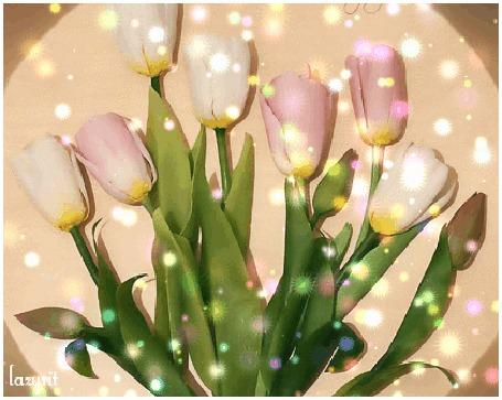 Анимация Розовые тюльпаны с листьями, by lazurit