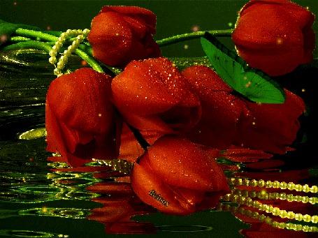 Анимация Красные тюльпаны в отражение воды с сидящей зеленой бабочкой, by dixinox