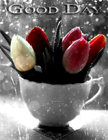 Анимация Разноцветные тюльпаны в чашке на фоне каплей дождя, (Good Day) by Kolibri
