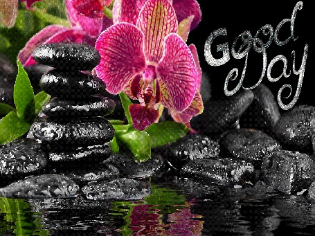 Анимация Цветы орхидеи на фоне камней и воды, (Good Day)