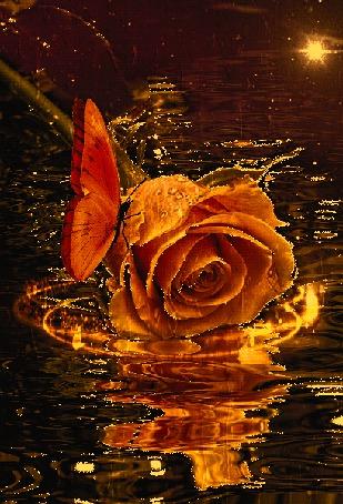 Анимация Роза, на которой сидит бабочка на фоне воды