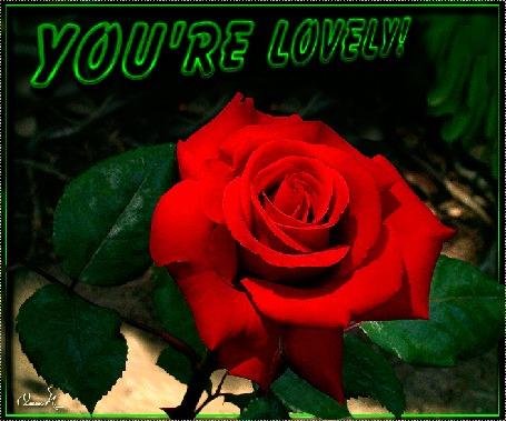 Анимация Красная роза с листьями, (YOU RE LOVELY!) by Ольга П