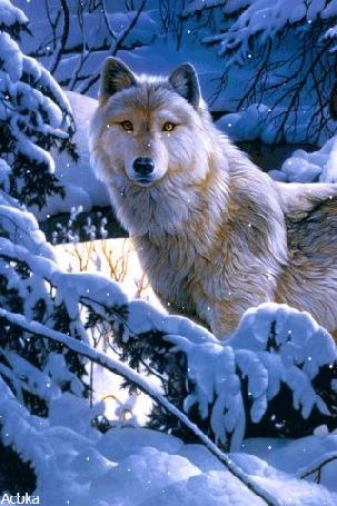 Анимация Волк стоит на фоне заснеженных елей на снегу, by Acbka