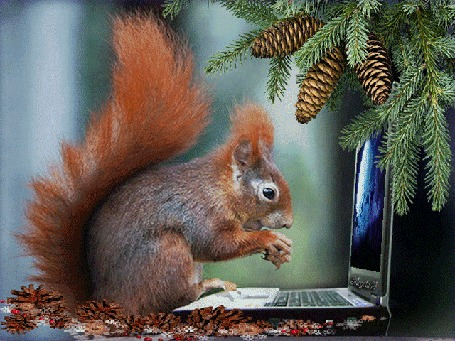 Анимация Белка стучит по клавишам ноутбука на фоне еловых веток с шишками