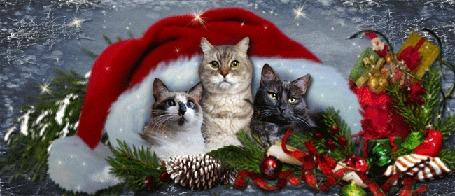 Анимация Три кошки на фоне новогодней шапочки, елочных игрушек, веток ели с шишками