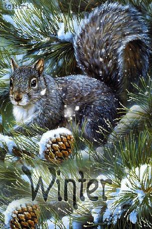 Анимация Белка на фоне заснеженных елочных веток и шишек (Winter) by Kolibri