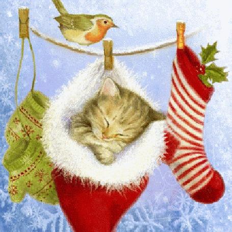 Анимация На бельевой веревке висят варежки, носок и спящий котенок в новогодней шапочке и сидит птица