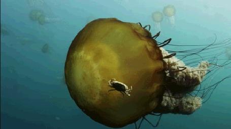 Анимация Медуза под водой