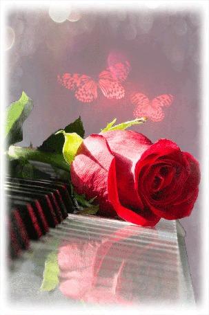 Анимация Красная роза на клавишах рояля на фоне бабочек
