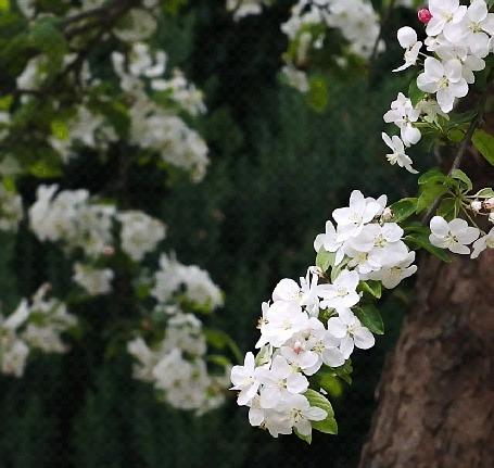 Анимация Весенние цветущие ветки