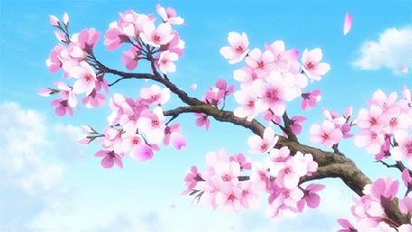 Анимация Весенние лепестки сакуры слетают с ветки дерева