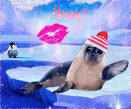 Анимация Озорной тюлень в шапочке лежит на льдине и ну очень артистично шлет воздушный поцелуй, играя всей тушкой, (Чмок!), автор ASlena Shem