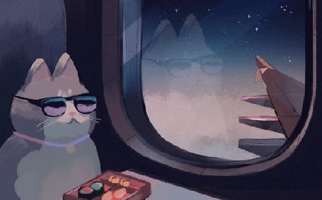Анимация Кот в очках в самолете сидит у иллюминатора, by Louie Zong
