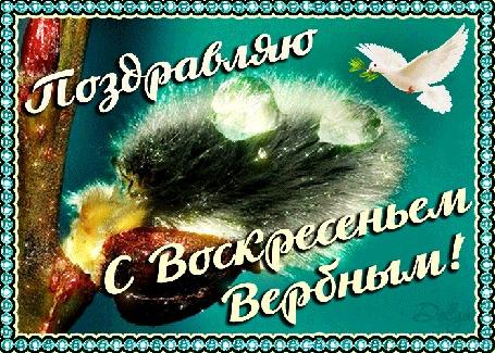Анимация Над веточкой вербы парит голубь (Поздравляю с воскресеньем вербным!)