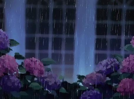 Анимация Кусты гортензии под дождем