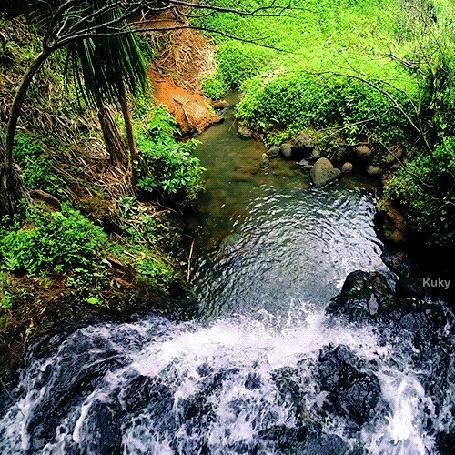 Анимация Быстрая река в лесу